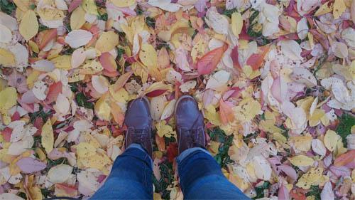 halo, november